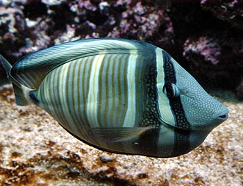 ... free pictures of tropical marine fish ideal free pictures of tropical